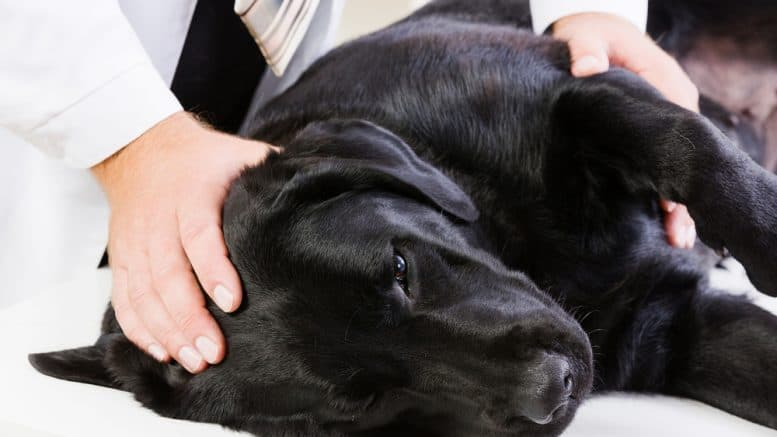 Beberapa Penyebab Muntah Pada Anjing Yang Perlu Diketahui